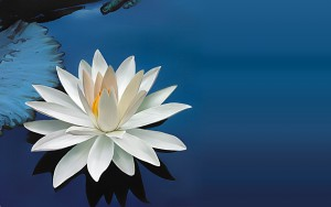 lotus-flower-images-and-wallpapers-3